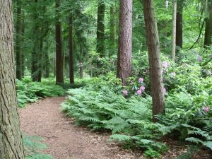 The New Wood, Weasenham