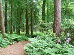The New Woods at Weasenham